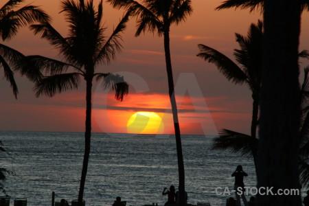 Sunset palm tree sun sky silhouette.