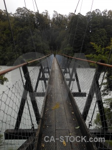 Suspension bridge new zealand wood tree wire.