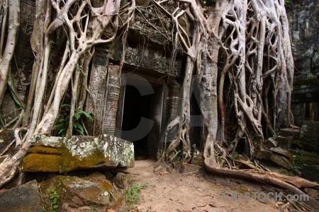 Ta prohm ruin carving cambodia stone.
