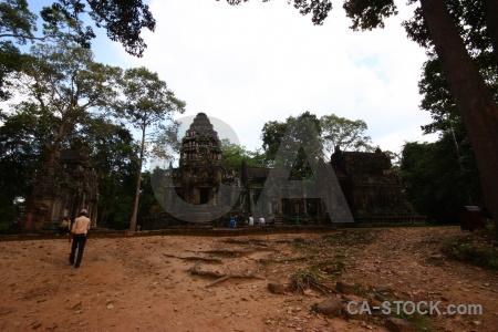 Temple buddhism tree khmer lichen.