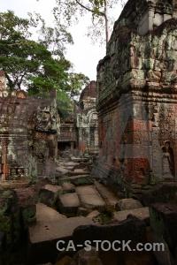 Temple buddhist fungus cambodia unesco.