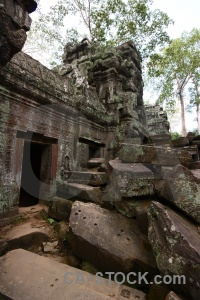 Temple carving lichen tree angkor.
