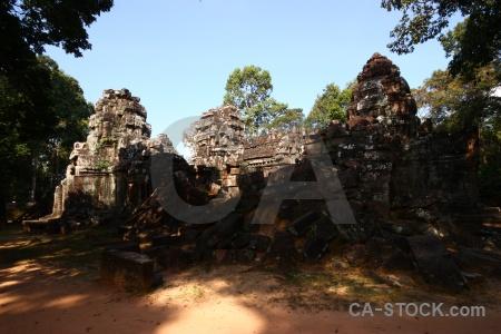 Temple fungus block tree unesco.