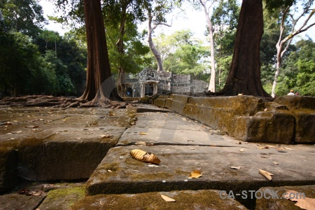 Temple ta prohm asia siem reap buddhism.