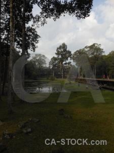 Temple tree angkor ruin cambodia.