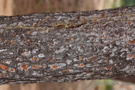 Texture bark wood.