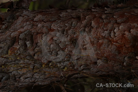 Texture bark wood black.