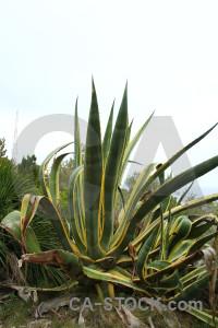 Texture green cactus nature plant.