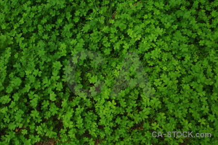 Texture green nature.