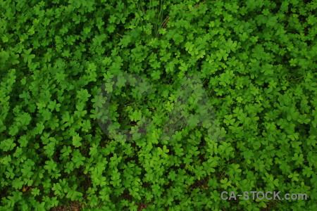 Texture green nature.