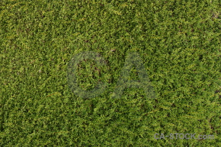 Texture green nature grass.