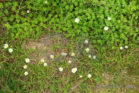 Texture green nature grass.