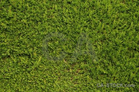 Texture nature green.