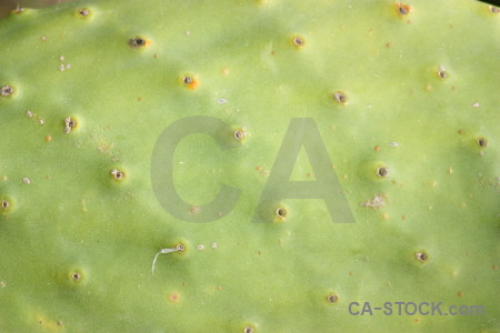 Texture nature plant cactus green.