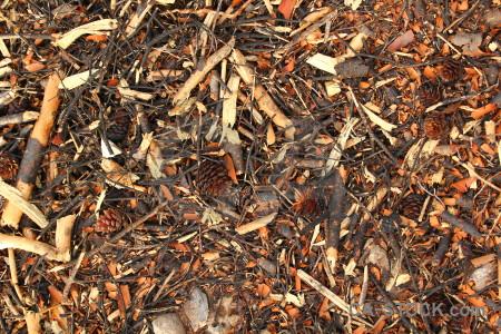 Texture stick wood twig javea.