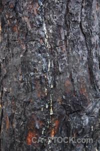 Texture wood bark burnt europe.