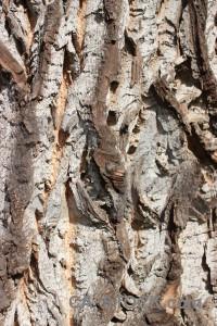 Texture wood white.