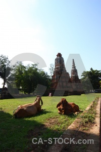 Thailand buddhism animal building wat phu khao thong.