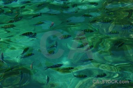 Thailand koh yung sea mosquito island phi.
