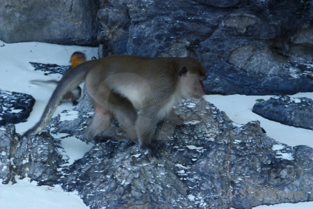 Thailand monkey beach ko phi don tropical island.