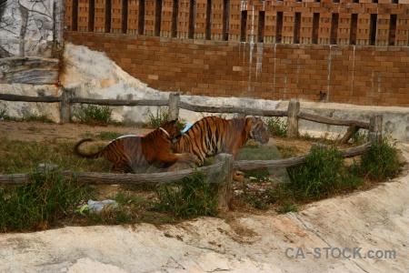 Thailand tiger temple animal wat pha luang ta bua pa yansampanno.