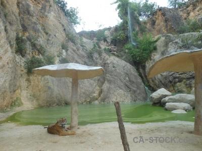 Thailand tree wat pa luangta maha bua yannasampanno water tiger.