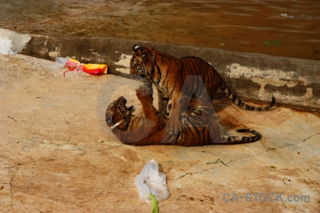 Thailand wat pha luang ta bua animal pa luangta maha yannasampanno pool.