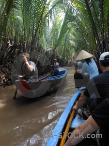 Thoi son island con thoi mud mangrove palm tree.