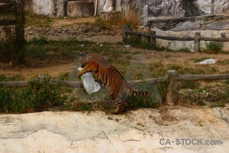 Tiger temple wat pa luang ta bua yansampanno animal asia.