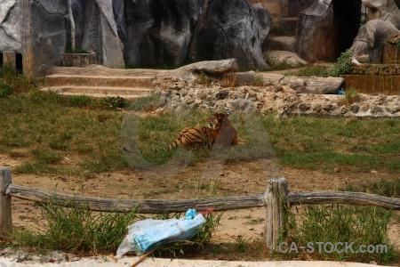 Tiger thailand wat pa luangta maha bua yannasampanno southeast asia pha luang ta.