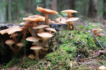 Toadstool green fungus mushroom.
