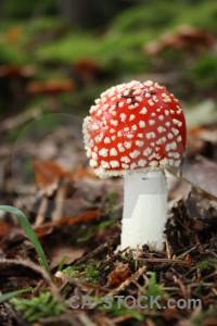 Toadstool mushroom fungus red green.