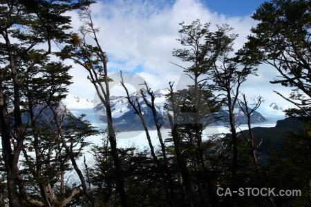 Torres del paine glacier grey chile tree branch.