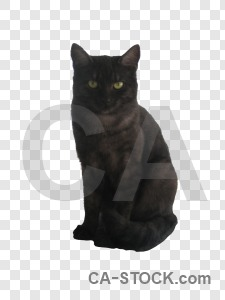 Transparent cat animal cut out.