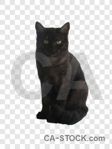 Transparent cat animal cut out.