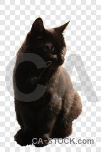 Transparent cut out cat animal.