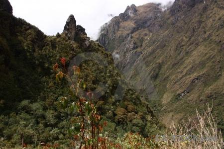 Tree altitude sky mountain bush.