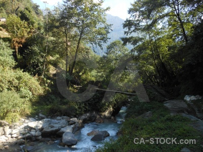 Tree asia bridge modi khola valley nepal.