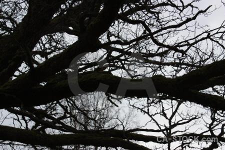 Tree black white branch.