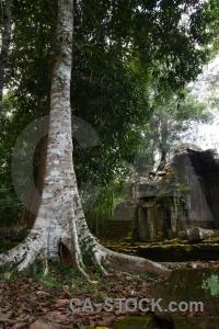 Tree block unesco stone khmer.