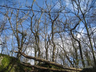 Tree branch blue.