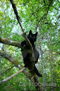 Tree branch europe karlskrona cat.