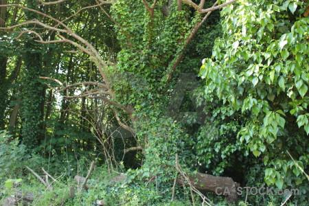 Tree branch green leaf.