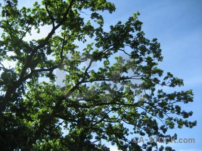 Tree branch green leaf blue.