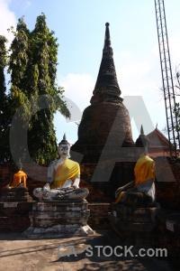Tree brick asia buddhism temple.