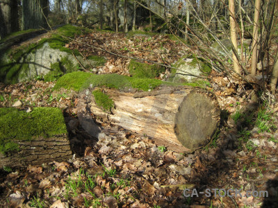 Tree brown stump green.