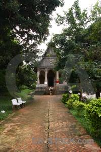 Tree buddhist southeast asia buddhism temple.