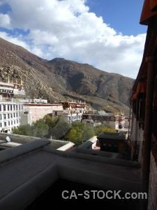 Tree buddhist tibet china drepung monastery.