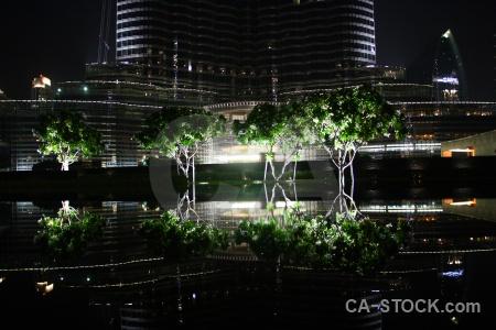 Tree dubai asia western uae.