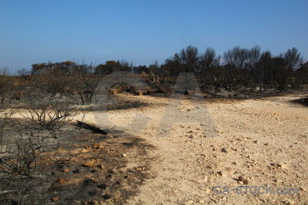 Tree europe javea ash montgo fire.
